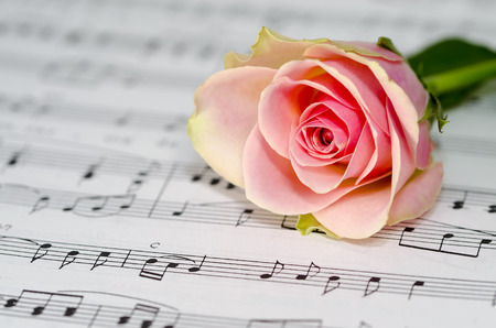 Beautiful  pink rose and a sheet of classical notes for piano Фото со стока