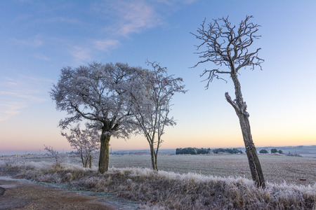 Sun illuminates frosty trees and meadow. Beautiful christmas nature.
