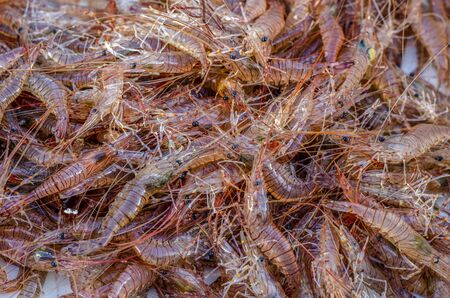 Fresh sea shrimp from the atlantic ocean. Products from the sea (seafood)