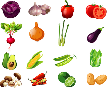 Various collection of vegetables in cartoon illustration for kids educational purposes. Illustration