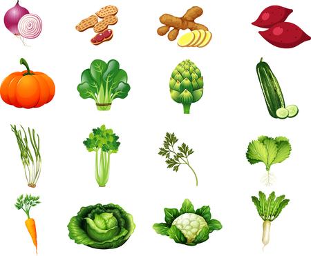 Vegetables Set2 矢量图像