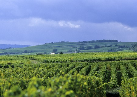 Rheingau vineyard a famous german vine are. photo
