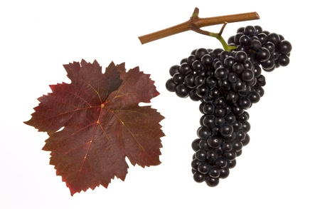 domina: red leaf and grapes of red domina Stock Photo