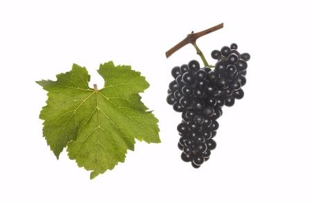 regent: leaf and grapes of red regent