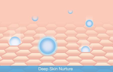 有効成分は、皮膚に深いを育成します。  イラスト・ベクター素材