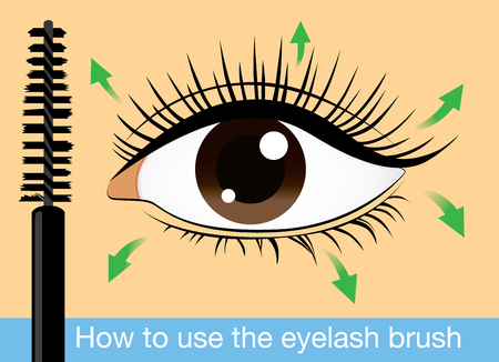 eyelash: Direction of brushing eyelash with mascara for long eyelash and beauty