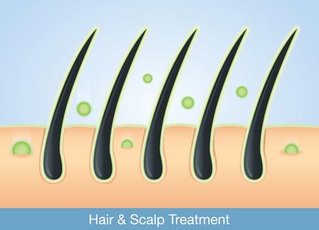 pelo: Tratamiento Ingrediente activo profundamente en el cabello y el cuero cabelludo. Vectores