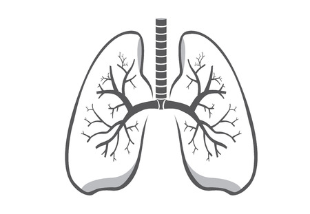 airway: Lung symbol gray color on isolated background for logo design, web icon and other job about medical and health. Illustration