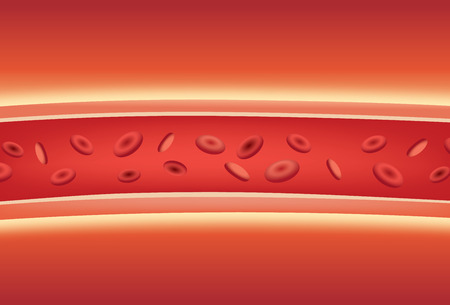 red blood cell: En el interior de los vasos sanguíneos. Ilustración sobre la medicina y la anatomía.
