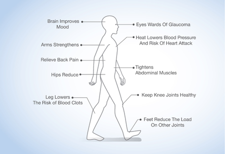 lowers: Benefits of walking. Illustration about human walking.