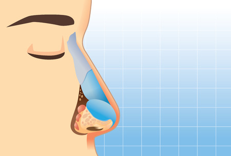 Anatomy of human nose on blue background. Illustration about inner of human nose for study and medical. Illustration