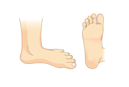 Foot  in side view and bottom of foot. Illustration about foot care. Illustration
