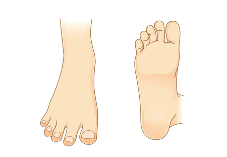 foot care: Foot vector in side view and bottom of foot. Illustration about foot care.