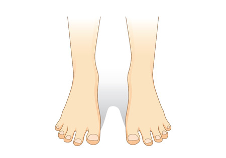 foot care: Feet vector in front view. Illustration about foot care. Illustration