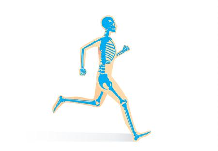 人間の骨が分離して実行中解剖学。人間の身体とスポーツについての図。  イラスト・ベクター素材