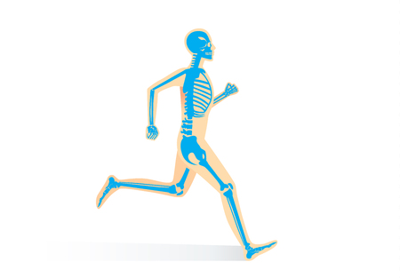 Human Bone Anatomy while run isolated. Illustration about human physical and sport.