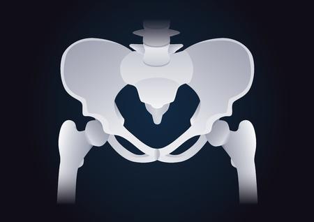 forme et sante: forme normale de l'os pelvien humain. Illustration à propos médicaux et de santé.