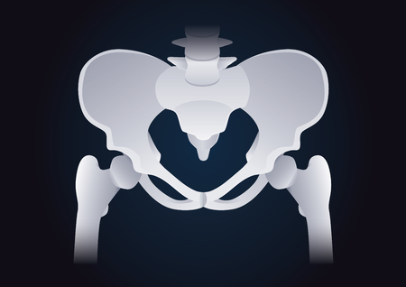 Normal shape of human Pelvic bone. Illustration about medical and health.