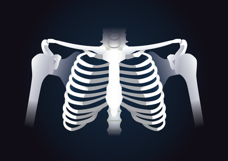 collarbone: Human rib cage vector in dark background. Illustration about human skeleton.