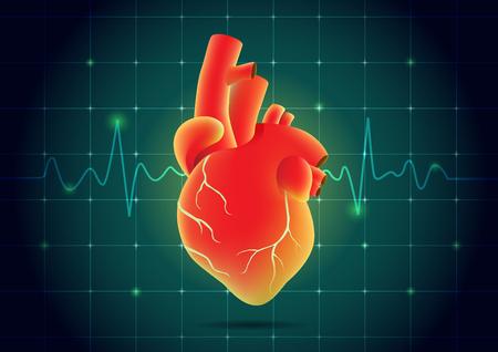 Corazón rojo corazón humano en el monitor de pulso de fondo. Ilustración sobre salud y medicina.