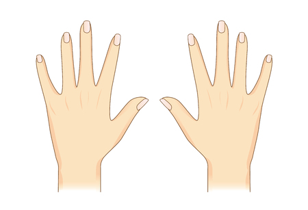 middle joint: A Vector hand in back side view on isolated. Illustration about Human body part.