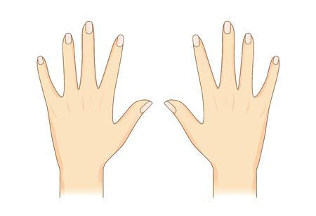 Une main de vecteur en arrière sur la vue isolée. Illustration sur la partie du corps humain.