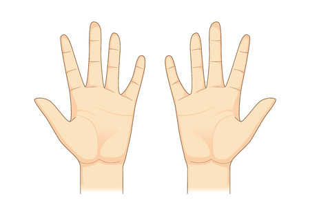 pinky: Two palm hand vector on isolated. Illustration about Human body part.
