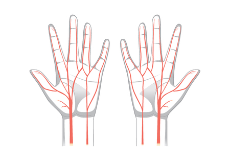 Nervi della mano in stile vettoriale. illustrazione su medicina e scienza.