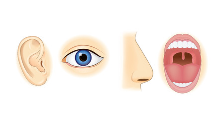 Ear Eye Nose and Mouth in vector style isolated on white. Illustration about human sensation. Vettoriali