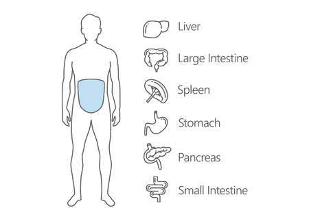 wastes: Human Gastrointestinal system scan. Illustration about internal organ and health check up.