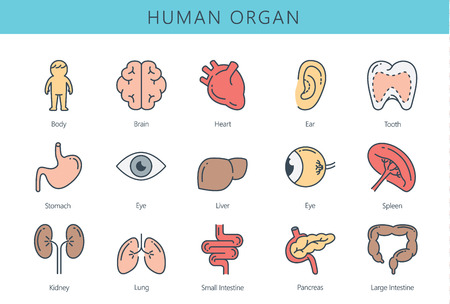 large intestine: Human internal organ icon collection. Illustration about medical and anatomy. Illustration