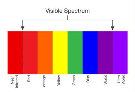 Grafiek van zichtbare spectrum kleur. Illustratie over menselijke visie en licht.