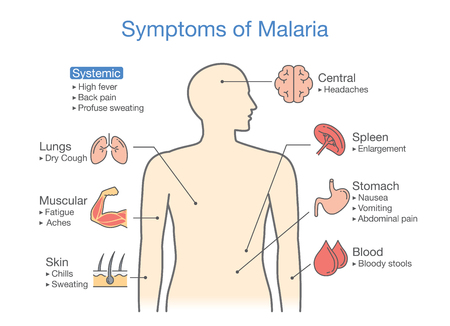 Diagram for patient with Malaria symptoms appear. Illustration about medical and health.