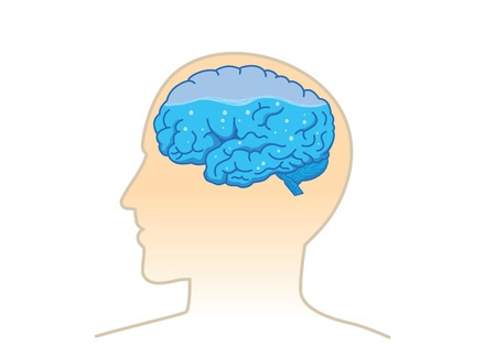 Water inside of the human brain. Illustration about composition of body.
