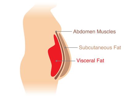 Lokalizacja tłuszczu trzewnego przechowywanego w jamie brzusznej. Ilustracja o schemacie medycznym.