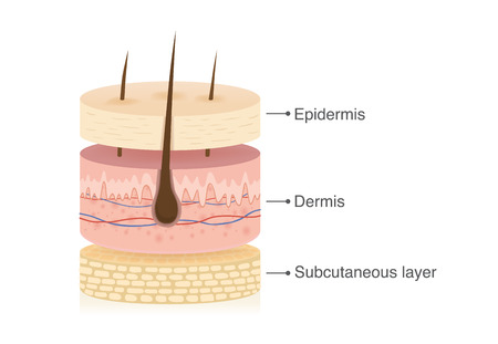 Trois couches principales de la peau humaine avec 3 dimensions en forme de cercle. Illustration sur le schéma médical.