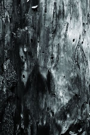 woodsy: Mystic bark texture background. Stock Photo