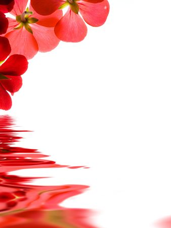 ripple: Red flowers reflecting over white background