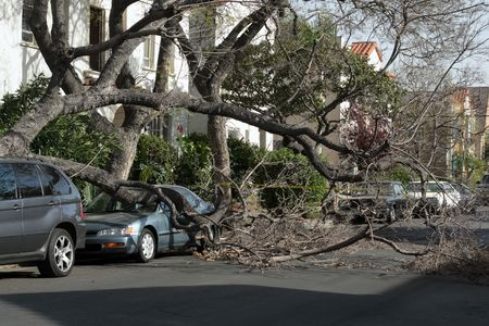 the aftermath: Car trapped under fallen tree after wind storm. Los Angeles, California. Stock Photo