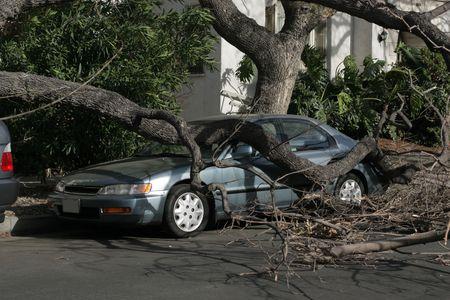 destroyed: Auto gefangen unter fallenden Baum nach dem Sturm. Los Angeles, Kalifornien, USA. Lizenzfreie Bilder