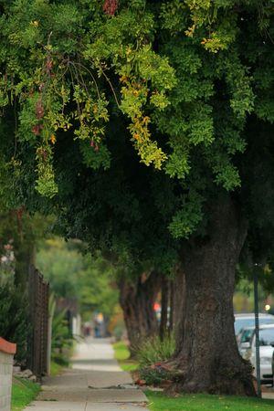 shady: Old wayside trees. Shallow DOF, focus on foreground.