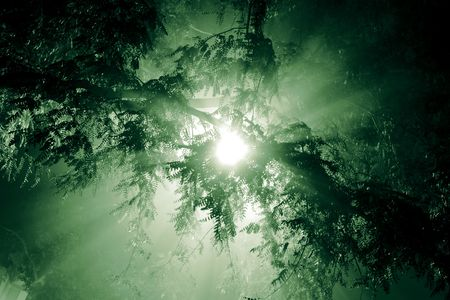 Rays of light shining through tree branches photo