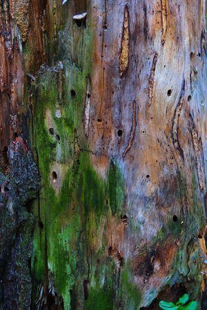 mosses: Mystic bark texture background. Stock Photo