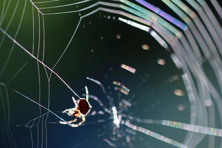arachnoid: Spider on spiderweb. Macro close-up, shallow DOF. Stock Photo
