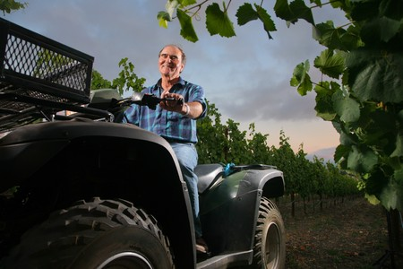 Farmer in vineyard driving small tractor or all terrain vehicle. Stock Photo - 4215289