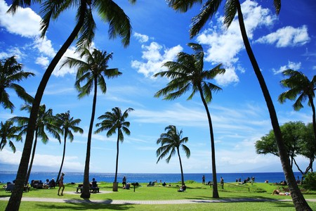 Palm trees at beautiful tropical beach in Hawaii Stock Photo - 4238177