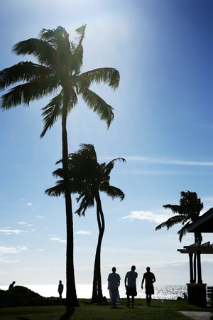 Palm trees at beautiful tropical beach in Hawaii Stock Photo - 4238081