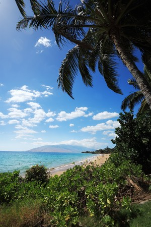 Palm trees at beautiful tropical beach in Hawaii Stock Photo - 4238231