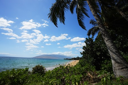 Palm trees at beautiful tropical beach in Hawaii Stock Photo - 4238178