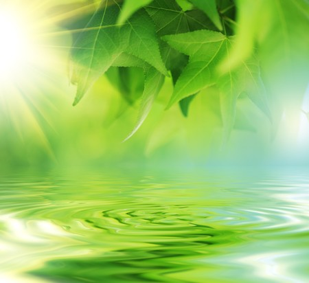 reflects: Fresh green leaves over water